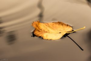 seasons, Water, Leaves, Fall