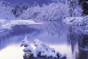 ice, Trees