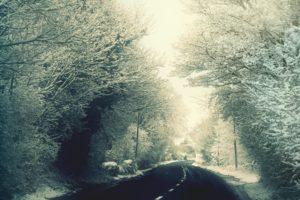 snow, Trees, Road