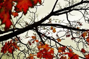 leaves, Fall, Branch