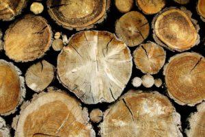 wood, Trees