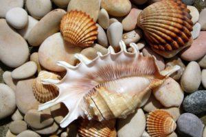stones, Seashells, Seashell