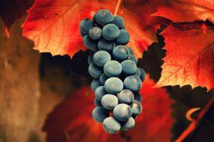 Black Grapes, Grapes