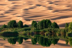 desert, National Geographic, Camels, Dune, Reflection, Trees, Oases