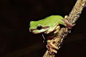 frog, Amphibian, Twigs