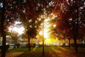 morning, Fall, Trees