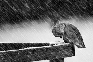birds, Rain, Snow, Wood, Give up, Screws
