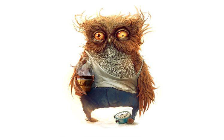 coffee, Owl, Morning HD Wallpaper Desktop Background