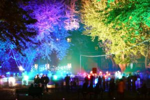 colorful, Trees, Lights