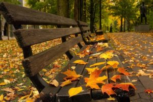 bench, Leaves, Fall, Pavements