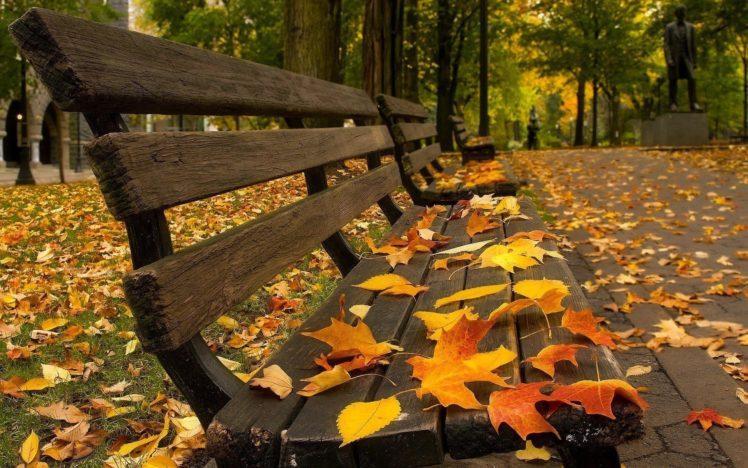 bench, Leaves, Fall, Pavements HD Wallpaper Desktop Background