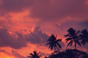 nature, Landscape, Water, Clouds, Trees, Beach, Sunset, Portrait display