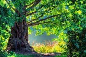 nature, Landscape, Trees, Plants, HDR, Summer, Sunlight, Leaves