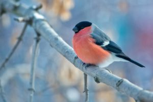 landscape, Nature, Birds, Animals